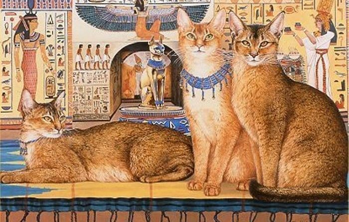 История домашней кошки
