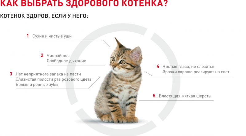 Советы по выбору котенка