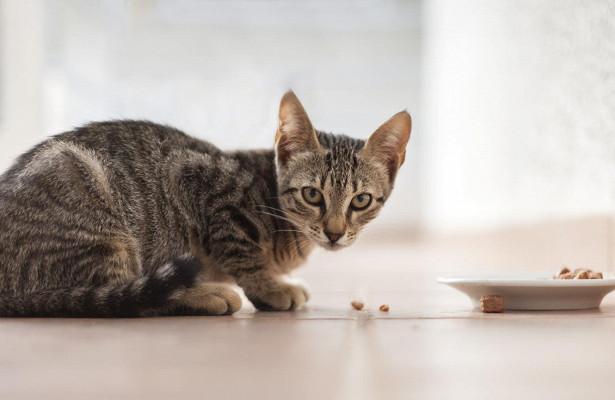 Поведение и привычки кошек