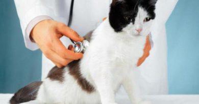 Профилактика и лечение заболеваний у кошек
