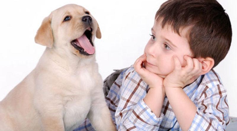 Воспитание четвероногого друга - собаки