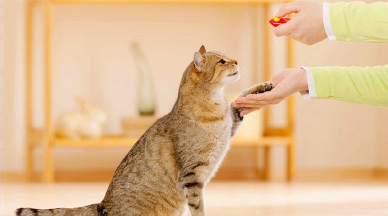 Воспитание и обучение кошек