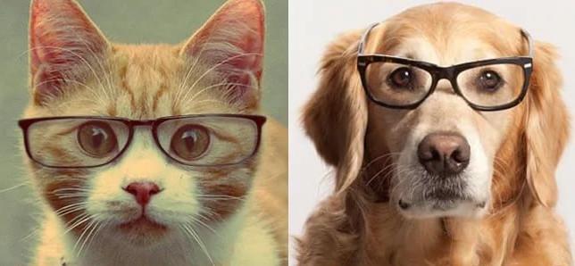 Кто умнее мы или животные?