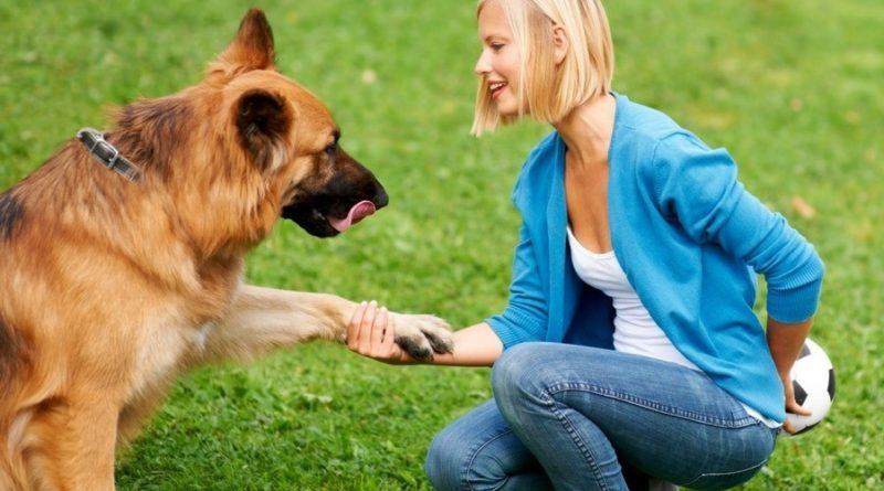 Советы по воспитанию щенка