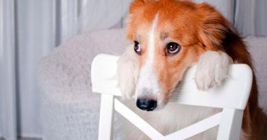 Есть ли у собак желания?