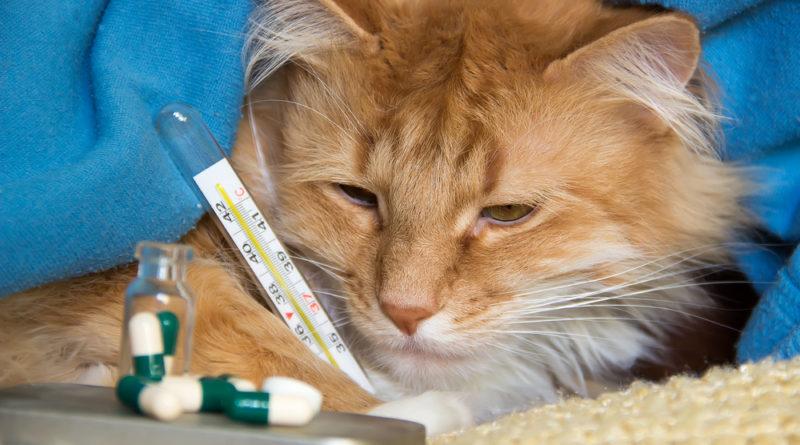 Паразитарные заболевания кошек