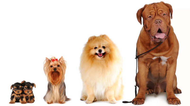 Породистость и породность собак