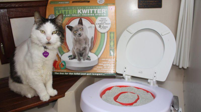 Приучение кошки к туалету