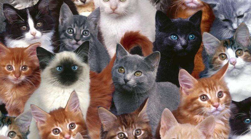 Какую кошку выбрать?