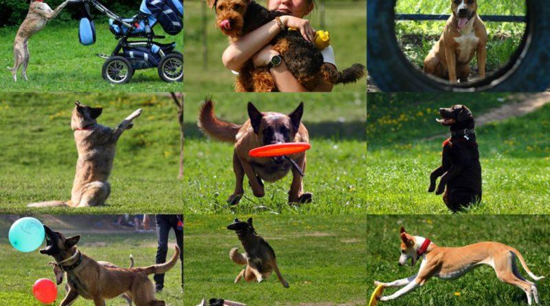 Обучение и дрессировка собак
