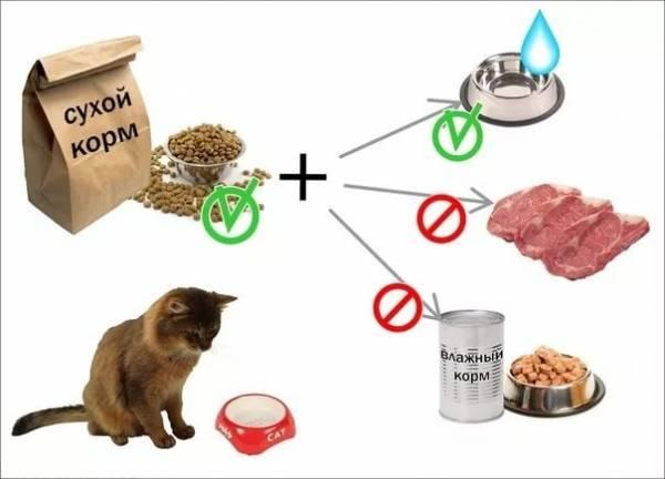 Основные правила кормления кошек