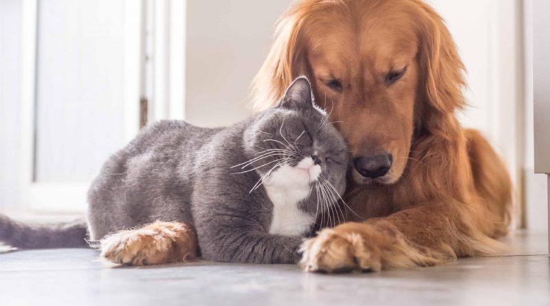 Кошка и другие домашние животные