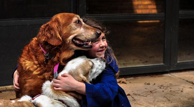 Сторожевая служба собаки