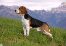 Внешний вид и анатомия собак