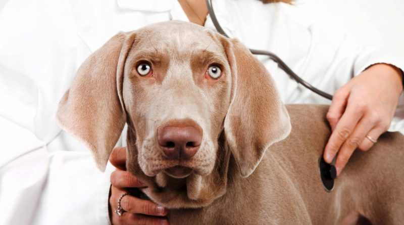 Предрасположенность различных пород собак к заболеваниям