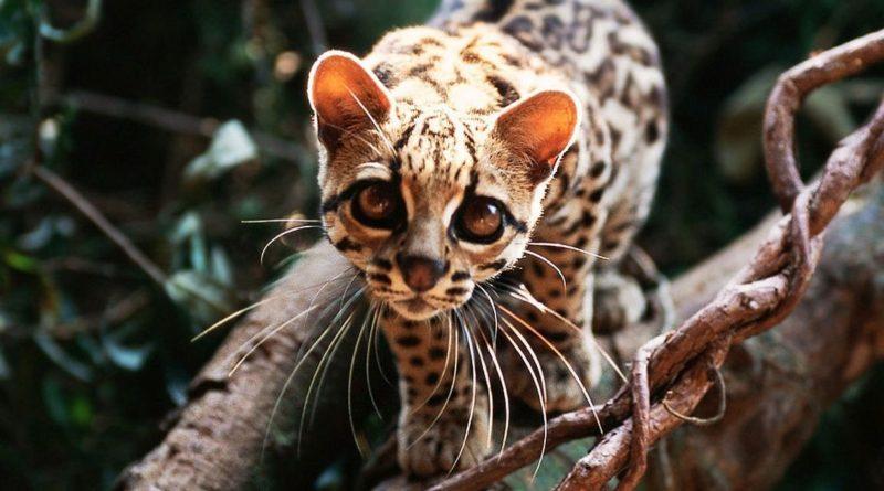 Самые необычные животные планеты