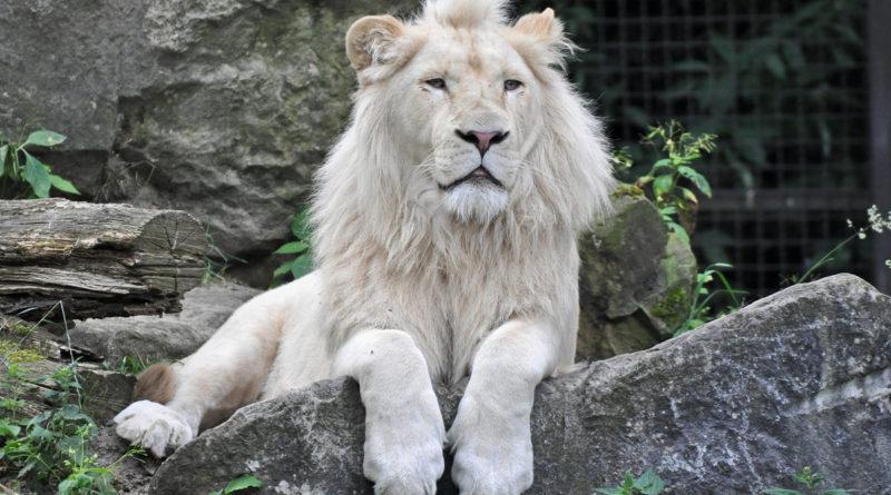 Самые редкие животные в мире