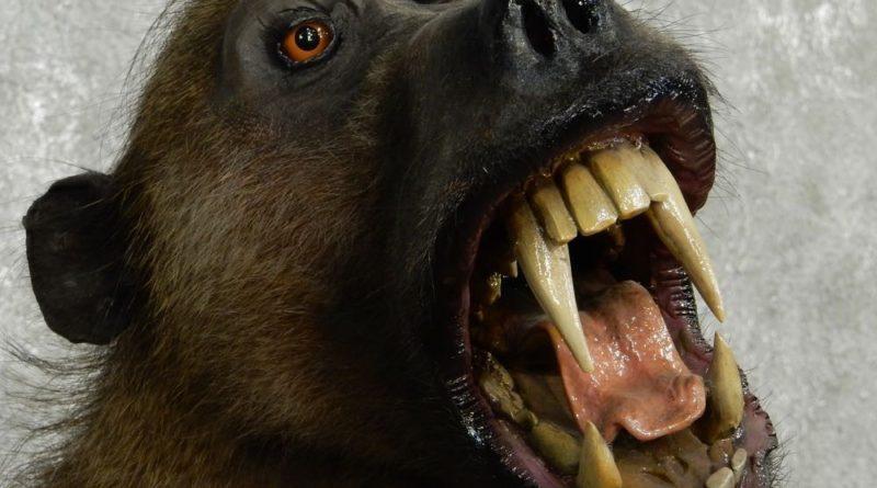 Бабуин: Почему их боятся даже львы?