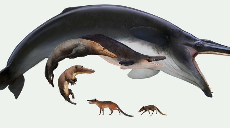 Эволюция Китов: Из крысы в крупнейшее животное в истории Земли всего за 50 млн лет