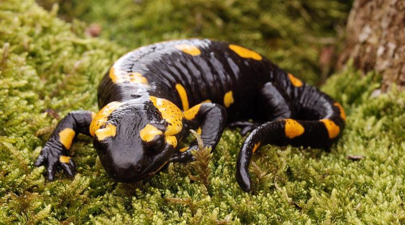 Огненная саламандра: Средневековье снова в моде?