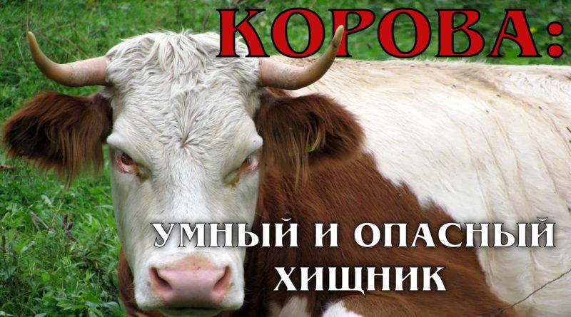 Корова: Хищное или травоядное животное?