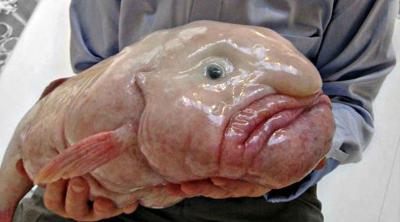 Рыба-капля: Познала всю тяжесть бытия