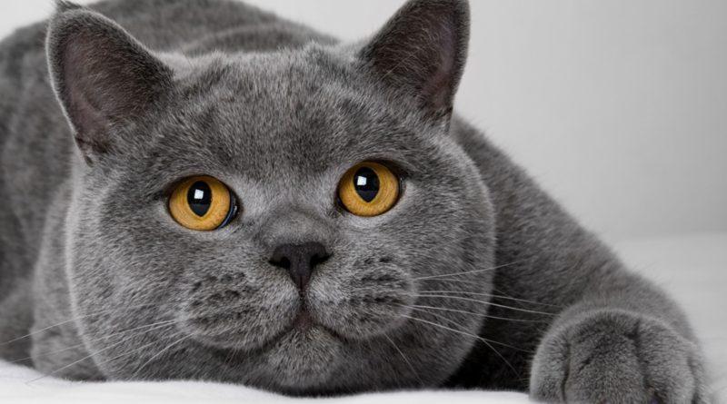 История одного британца: Как отучить кота гадить? Заведи собаку!
