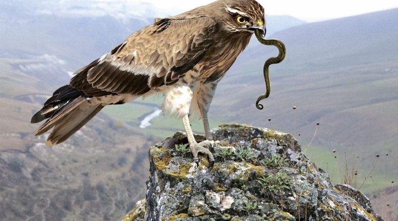 Змееяд: Убивает змей самым изощрённым способом