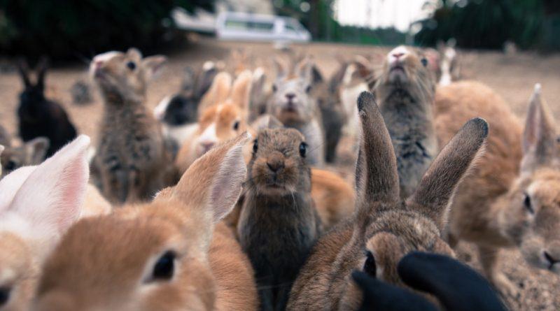 Кролики: Унизили природу Австралии и еще немного непристойностей