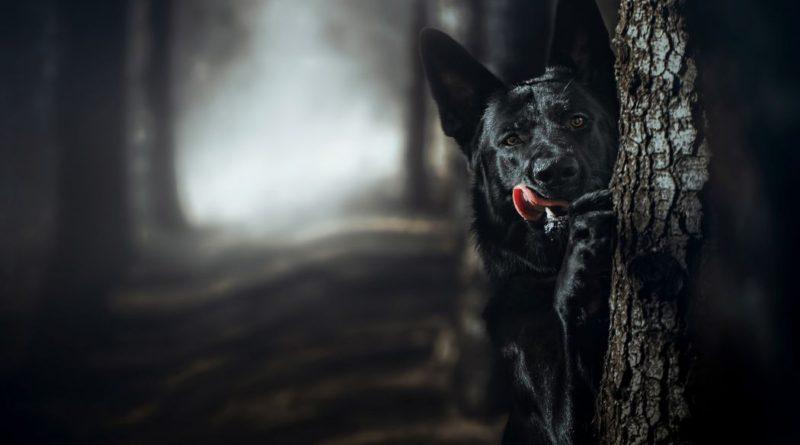 Черные псы: Аномальный феномен природы