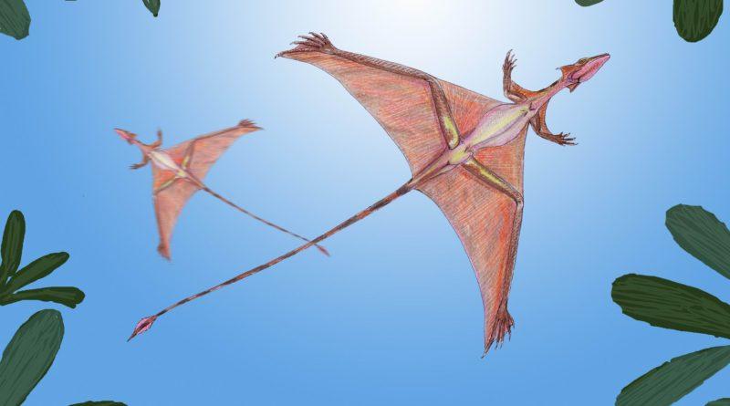 Шаровиптерикс: Cущество, которое поднялось в воздух при помощи попы