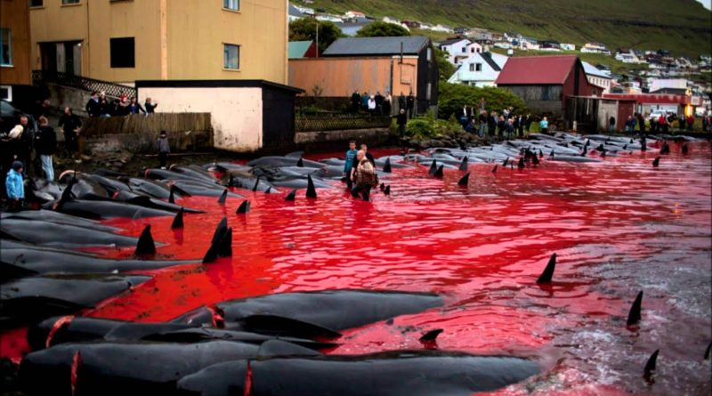 Гринда: Кровавая баня на краю света