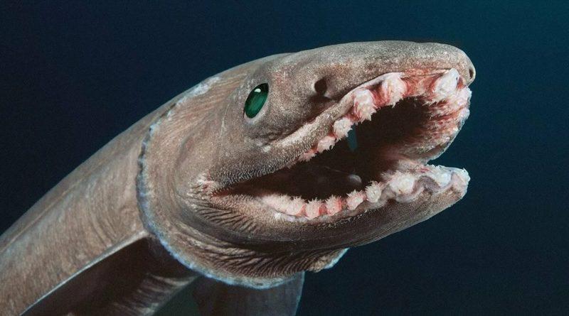 Плащеносная Акула: Древнее зло будоражит морские глубины