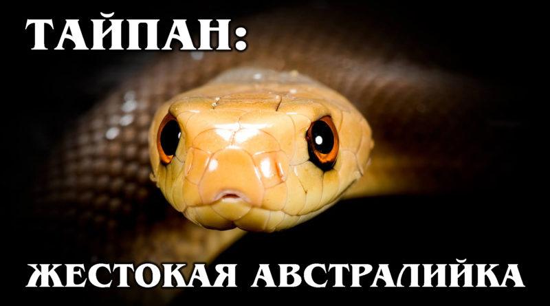 ТАЙПАН: Самая ядовитая, жестокая и крупная змея Австралии   Интересные факты про змей, рептилий и животных