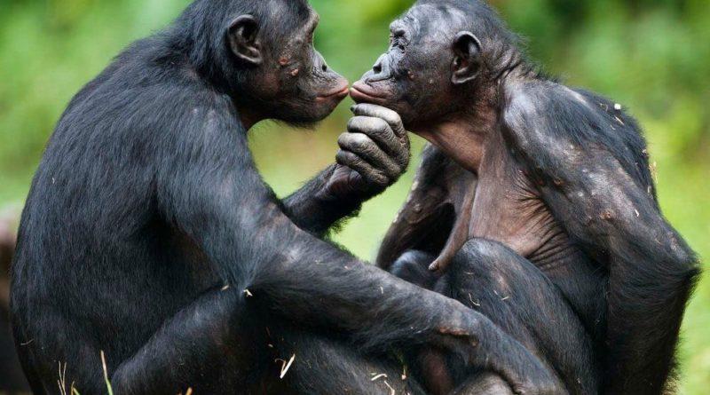 Симпатрия: Новые животные после спаривания разных видов