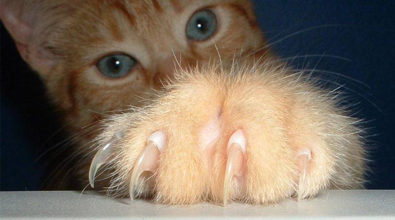 Опасность кошачьих царапок