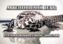 АРГЕНТИНСКИЙ ЧЁРНО-БЕЛЫЙ ТЕГУ: Теплокровная ручная рептилия, которая умеет видеть сны