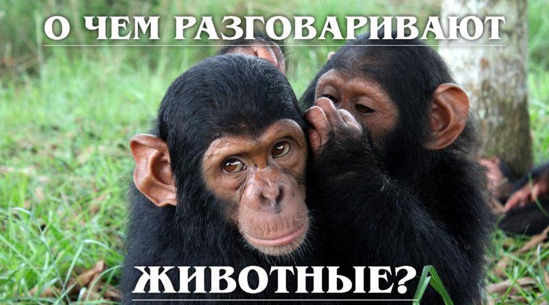 Общение животных: О чём РАЗГОВАРИВАЮТ Животные?