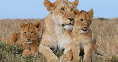 Дела семейные: О родителях и их детенышах в Мире Животных
