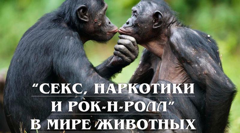 Алкоголизм, наркомания, гомосексуализм, любовь и секс в Мире Животных