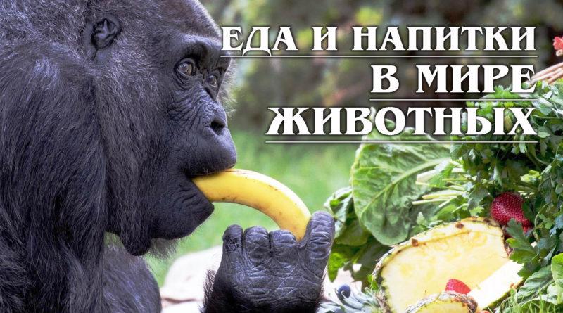 Еда и напитки в Мире Животных