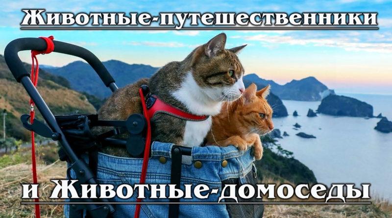 Животные-путешественники и Животные-домоседы