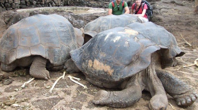 Галапагосская черепаха: Доисторическое чудо