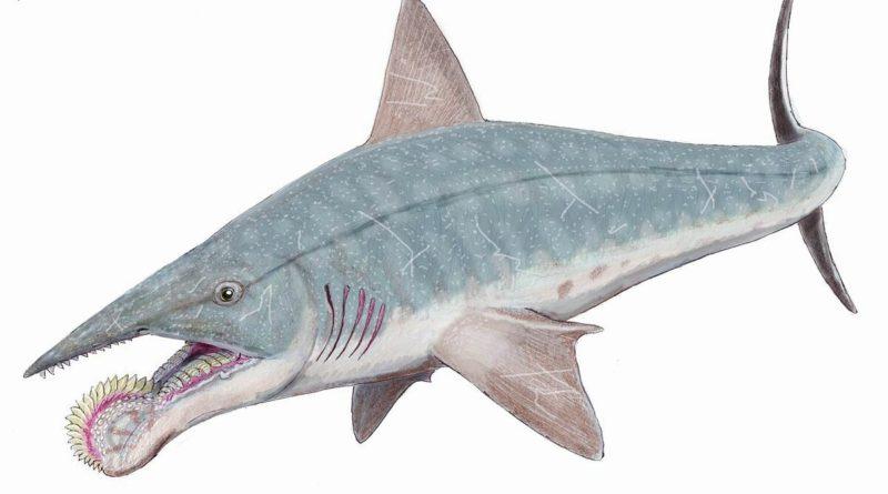 Геликоприон: Акула с циркулярной пилой вместо челюсти