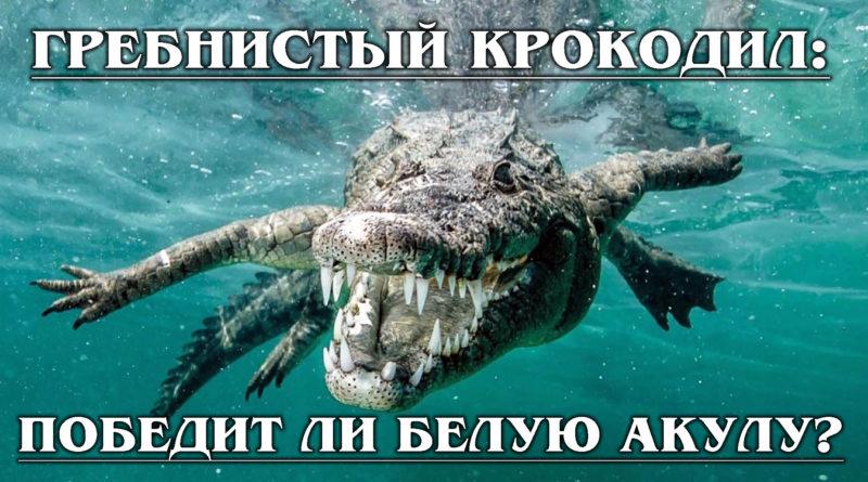 ГРЕБНИСТЫЙ КРОКОДИЛ: Самый большой морской крокодил против акулы