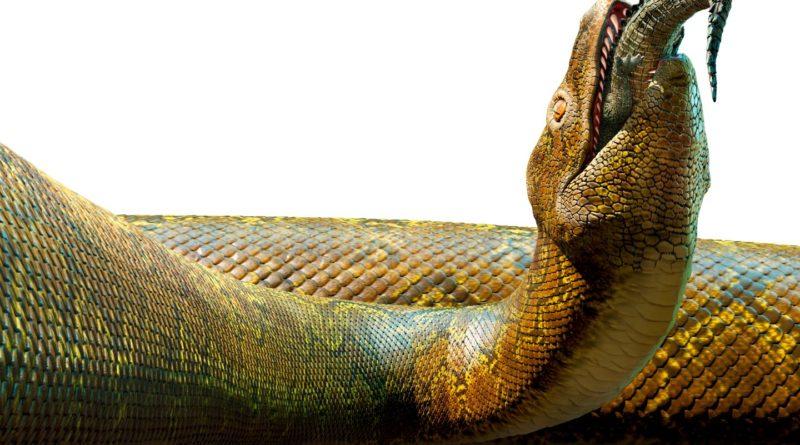 Титанобоа: Крупнейшая змея в истории Земли