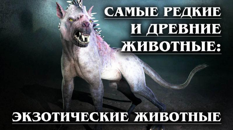 САМЫЕ РЕДКИЕ И ДРЕВНИЕ ЖИВОТНЫЕ: Экзотические животные