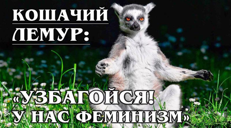 КОШАЧИЙ ЛЕМУР: Мокроносая обезьяна или кошка-феминистка?