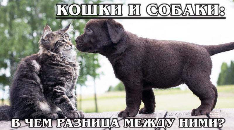Как кошка с собакой: В чем разница между ними?