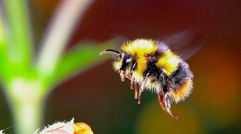 Шмель: Пчёла из параллельной вселенной